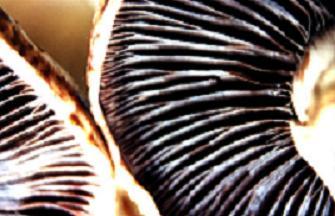 """<img src=""""http://www. 2483_2056.jpg"""" align=""""right""""alt=""""mushrooms"""">"""